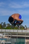 Dive_Swim_Practice 015