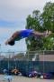 Dive_Swim_Practice 147