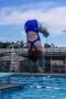 Dive_Swim_Practice 208