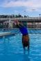 Dive_Swim_Practice 218